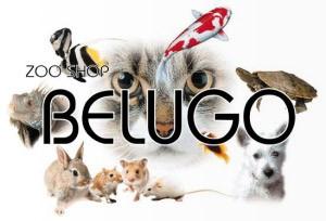 Zoo Shop Belugo Pets Animal Shops Pets Corner Zagreb Expat